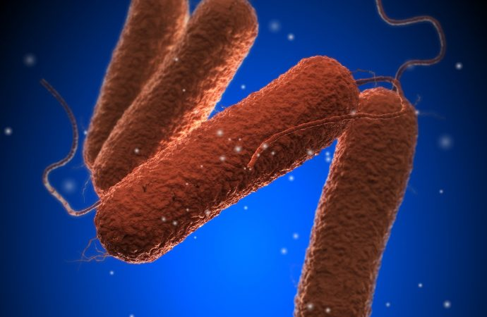 4th Case of Tropical Bacterial Illness Found in the U.S.