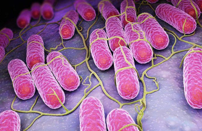 Salmonella Illness in 17 States Tied to Salami, Prosciutto
