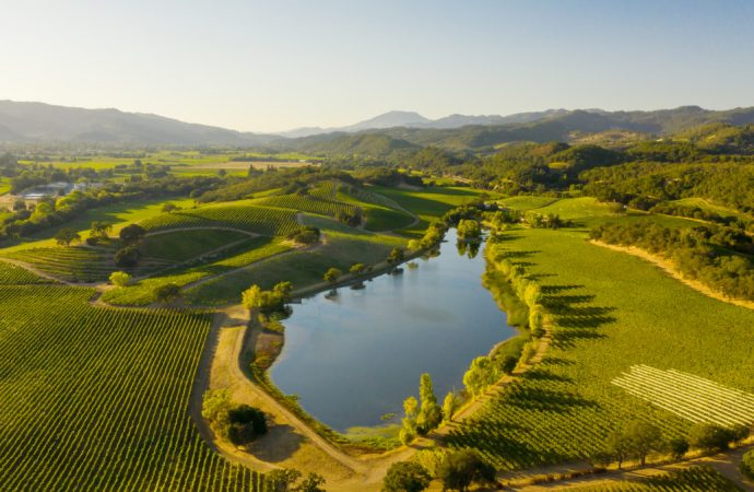 Can Luxury and Sustainability Coexist? These Napa Wineries Prove They Can—and Must